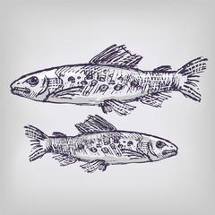 Zeichnung Forellen