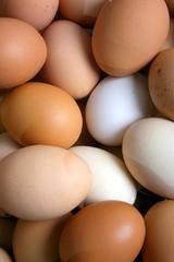 egg, eggs