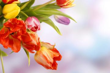 Bunter Frühlingsstrauss vor lila blauem Hintergrund