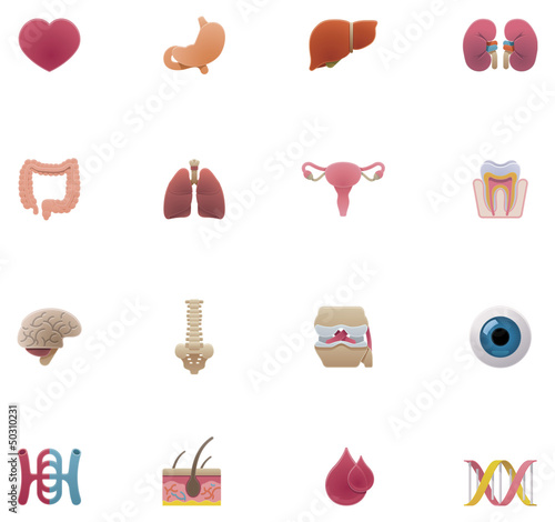 Vector anatomy icon set