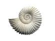 Leinwanddruck Bild - Seashell