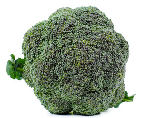 Head of fresh broccoli