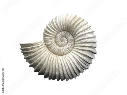 Leinwanddruck Bild Seashell