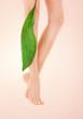 female legs with green leaf