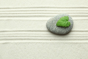 Green leaf on rock in sand