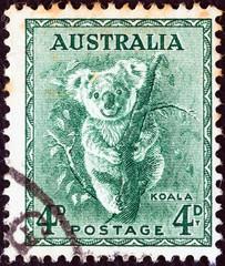 Koala (Australia 1937)