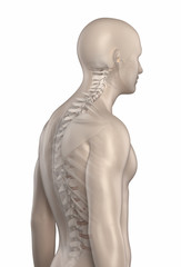 Man spine kyphosis phase 2 isolated