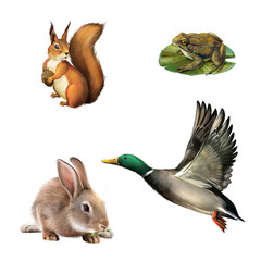 Squirrel, toad, rabbit, drake. Illustration on white background.