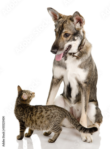 Dog And Kitten. isolated on white