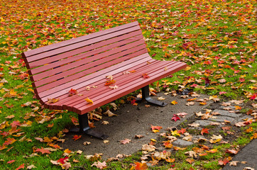 Red wooden bench surrounded by colorful autumn leaves