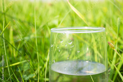 glass of water on green grass
