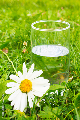 glass of water and white daisy in green grass