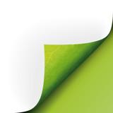 Bio Blatt Ecke unten grün vector