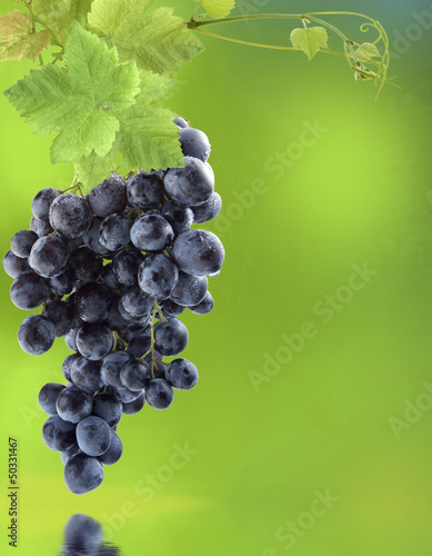 grappe de raisin muscat noir