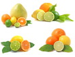 ripe citrus fruit  isolated on white