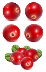 Ripe red cranberries with leaves