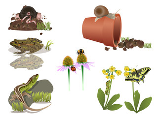 Small animals in nature