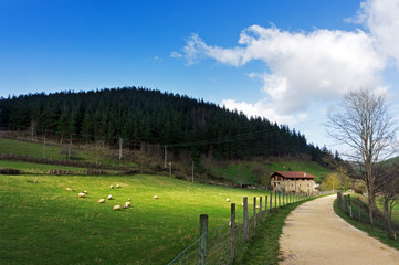 Basque farmhouse with sheep and a path