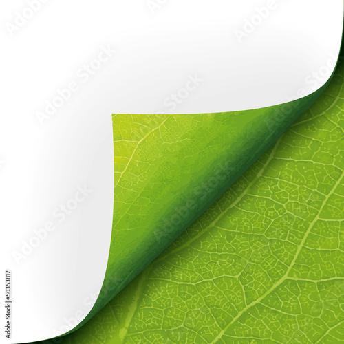 Ecke Pflanzenstruktur - 50353817
