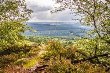 Blick vom Berg auf ein Waldgebiet.