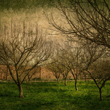 textured fruit trees