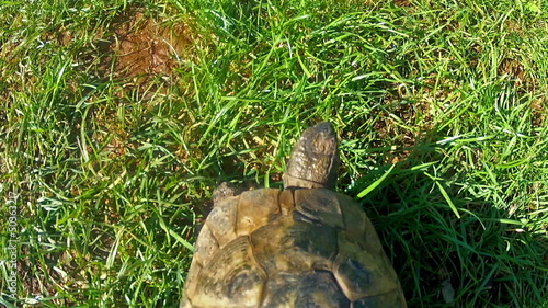 Tortoise goes from soil to grass, from above
