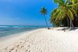 Fototapeten,strand,karg,ozean,palme
