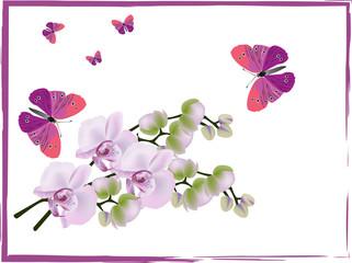 light pink orchids and dark butterflies