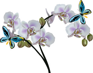 light orchid flowers and two blue butterflies