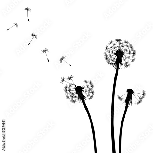 Floral background, dandelion - 50370844