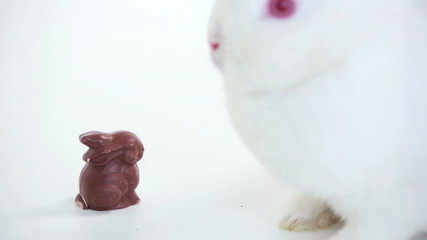White bunny sniffing chocolate bunny