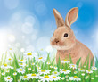 Vector of rabbit in flowers on sky background