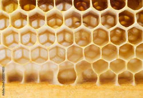 Beer honey in honeycombs.