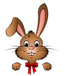 Hase Osterhase Kaninchen