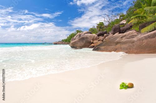 Fototapeten,seychelles,strand,palme,insel
