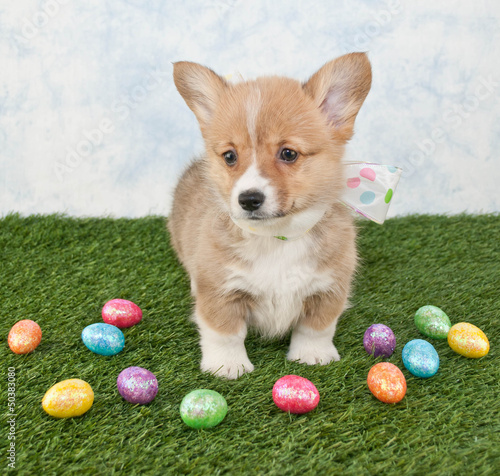 Easter Corgi Puppy