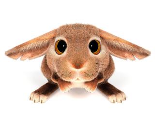 Touching rabbit