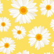 Seamless background with daisy flowers on yellow. Vector. - 50385063