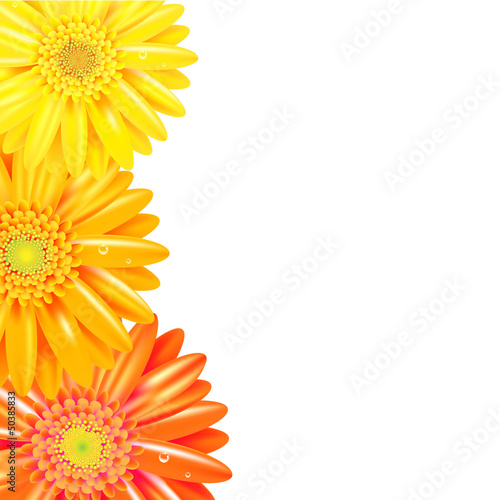 Yellow And Orange Gerbers Border
