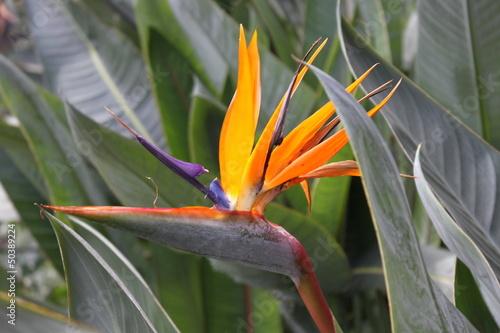 Fototapeten,storchennet,blume,kanarienvogel,orchidee