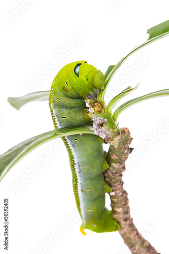green caterpillar on tree