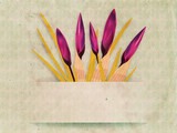 Vintage card with crocuses