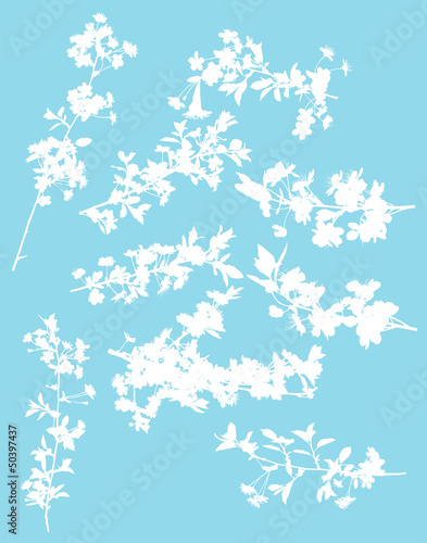 set of chery tree blossom on blue