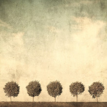 grunge obraz drzewa