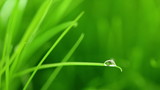 A raindrop on blade of grass