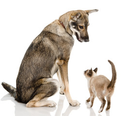 Dog and cat together isolated on white