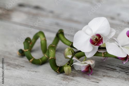 In de dag Bamboo Orchidee mit Bambus