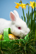 White rabbit resting on easter eggs in green basket
