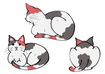 三毛猫正面、横、後