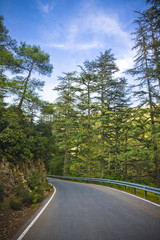 road of Cedars in Cyprus